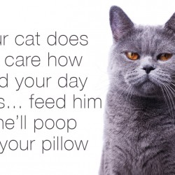 Your cat does not care how hard your day was... feed him or he'll poop on your pillow